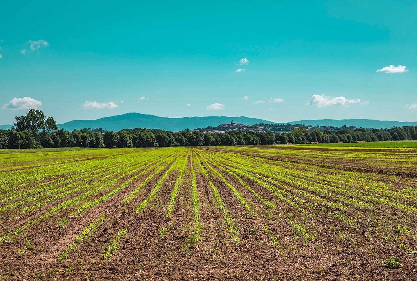 Agricoltura Biologica Valdichiana