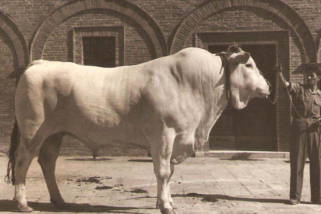 Selezione Chinina 1927